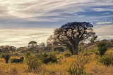 Elephants Disappear into the Landscape