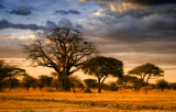 A Variety of Tanzania's Trees