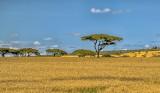 Wide-Open Kenya