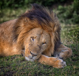 The King at Rest*
