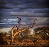 Clouds Over Tanzania