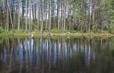 Wetlands and Woodlands 2017