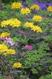 2017, 2018, Rhododendron Species Botanical Garden