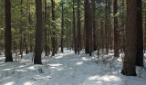 DeMeritt Forest 2-28-17.jpg