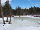Beaver Pond  Sunkhaze 3-2-17.jpg