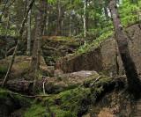 Birch Spring 6-31-11-pf.jpg
