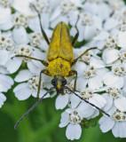 Bug b - City Forest 7-2-11-pf.jpg