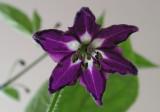 ManzanoOrange flower2 5-17-4 -pf.jpg