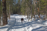 Kelley - Glenburn Trails 3-20-17.jpg