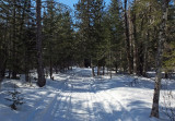 Glenburn Trails  c  3-20-17.jpg