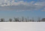 Along Snowmobile Trail 1-21-10-ed-pf.jpg