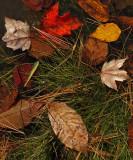 Leaves Little River Trail 10-19-16-ed-pf.jpg