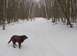 Kelley - Glenburn Trails 3-30-17.jpg