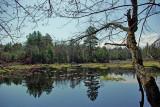 Pond at Northern Pond Natural Area 4-29-12-ed-pf.jpg