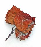 Leaves DeMeritt Forest 12-13-16-ed-pf.jpg