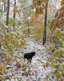 Kelley trail in Little Moose 10-14-09-ed-pf.jpg