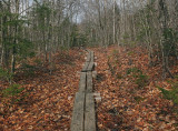 Partridge Pond Trail  4-13-17.jpg