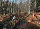 Stream Partridge Pond Trail  4-13-17.jpg