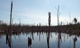 Beaver Pond Newman Hill - 4-15-17.jpg