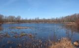 Pine Pond Newman Hill - 4-15-17.jpg