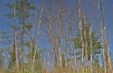 Reflection - Walden 5-7-11-pf.jpg