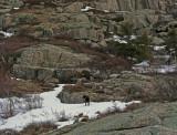 Bald Peak Trail c 2-23-10-ed-pf.jpg