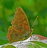 Butterfly Marsh Island c 7-2-12-pf.jpg