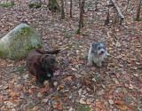 Kelley -and Cooper DeMeritt Forest  4-24-17-pf.jpg