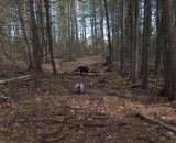 Cooper and Kelley Glenburn Trails c 4-25-17.jpg