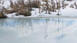 Frozen Marsh- City Forest 2-20-13-ed-pf.jpg