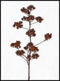 Weed Walden 1-23-12-ed-pf.jpg