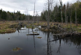 Small Pond at Perch Pond 5-12-17.jpg