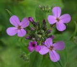 Wildflowers  Kenduskeag Stream 6-11-17-pf.jpg