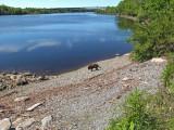 Kelley -  Penobscot River 6-10-17-pf.jpg