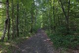 Trail Along Kenduskeg 6-12-17.jpg