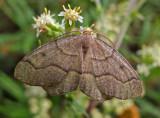 Moth - Loop Trail - Walden 9-11-13-pf.jpg