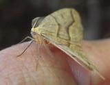 Moth - Fitts Pond b 9-4-13-pf.jpg