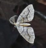 Moth - Fitts Pond 9-4-13-pf.jpg