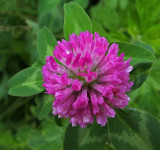 Clover Essex Woods 6-17-17.jpg