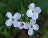 Wildflowers Trail Along Kenduskeg b 6-12-17-pf.jpg