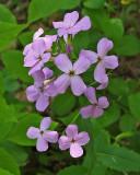 Wildflowers Trail Along Kenduskeg 6-12-17-pf.jpg