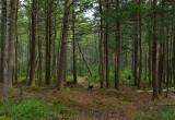 Forest loop Trail Tanglewood 4-16-12-ed-pf.jpg