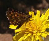 Butterfly Harbor Brook Trail  6-29-17.jpg