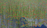 Reeds and Lily Pads Little Long Pond b 7-3-12-pf.jpg