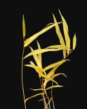 Weeds - Jordan Stream 11-12-11-ed-pf.jpg