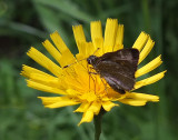 Butterfly Harbor Brook Trail b  7-9-17.jpg