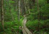 South Trail Perch-Pond- 6-10-16-pf.jpg