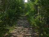 Trail Along Kenduskeag 7-14-17.jpg