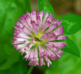 Clover Essex Woods 7-18-17.jpg