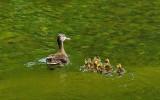 Ducks Harbor Brook 6-21-12.jpg